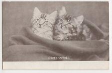 Cats, A Cosy Corner 1907 Postcard, B371