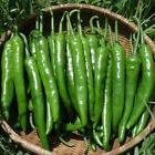 Korean Green Chili Pepper Seeds 50pcs Mild Cucumber Flavored Crispy Vegetable