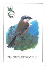FDC 2885 - Oiseau Buzin sur gravure format A4 !