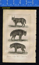 Caracal, Striped Hyena & Spotted Hyena - 1830 Goldsmith Engraving