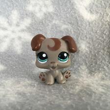 Littlest Pet Shop #1197 brown grey boxer puppy dog teal eyes curl