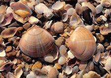 CPM - Estampa de mar los conchas
