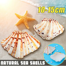 Marine Natural conch shells Beach Fish Tank Seashell Ornament Home Decoration