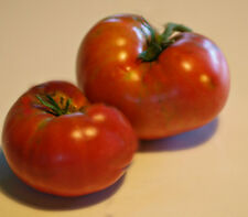 TOMATO MORTGAGE LIFTER  HEIRLOOM VARIETY HUGE TOMATOES 25 SEEDS GREAT FLAVOUR