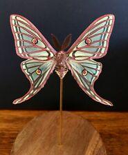 Papillon Graellsia isabellae d'Espagne naturalisé sous globe - Papillon Vitrail