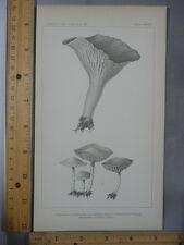 Rare Antique Orig VTG Mushroom Chanterelle Botany Chart Illustration Art Print