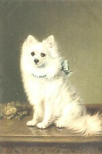 "Pomeranian / Spitz Dog ""Star of Devon"" Early 1905 8 New Large Note Cards"
