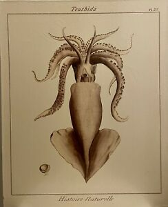 Giant Squid On Canvas Teuthida Historie Naturelle PL 215 Ready To Hang Sea Life