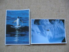 POSTCARDS GENTOO PENGUIN SURF-RUNNING - PAULET ISLAND ANTARCTICA GUNTER LENZ