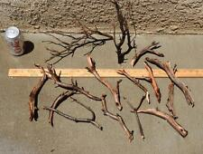 MANZANITA DRIFTWOOD MINI NANO GROUP 15 pieces ( moss plant aquarium )