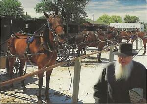 Horse Postcard -Amish horses and wagons