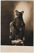 SUPER Unusual Real Photo - Stuffed Bear Cub? on Chair 1910 RPPC Taxidermy Teddy