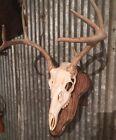 European Deer Skull Mount Wall / Table Pedestal Plaque Oak (Dark Walnut)