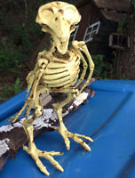 Bird Crow Raven Skeleton Bones Jointed Halloween Decor Prop Decoration Posable