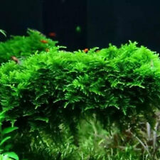 Aquarium Live Plant Anchor Moss For Shrimp & Fish Tank