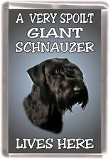 "Giant Schnauzer Dog Fridge Magnet  ""A VERY SPOILT .....LIVES HERE "" by Starprint"