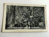 """VINTAGE 1940s Mini Photograph Souvenir 3.5X2"""" Troop At Fallen Monarch Mariposa"""
