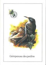 FDC 2919 - Oiseau Buzin sur gravure format A4 !