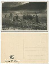38604 - Bauern mit Ochsenpflug - Echtfoto - alte Ansichtskarte