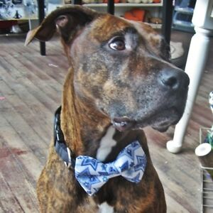 Happy Hanukkah Bow Tie for Dogs (UOH) - FREE SHIPPING