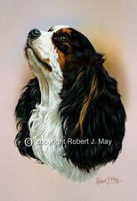 Cavalier King Charles Print by Robert J. May