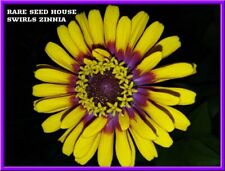 Swirls Zinnia 20 Seeds - Beautiful Bi-Color Blooms! Comb S/H See Our Store
