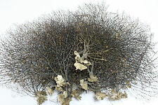 1 x Big black sea fan fish tank aquarium decoration, sea coral ornament TR-02