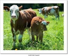 Portrait Of Mother And Baby Cow Standing Art Print Home Decor Wall Art Poster