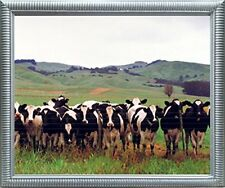 Country Cows Herd Holsteins Dairy Pasture Farm Animal Wall Decor Framed Picture