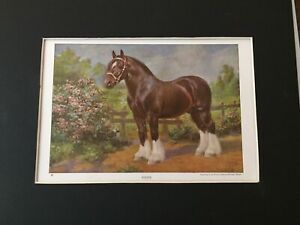 Shire Horse Print -1923 National Geographic - By Edward Miner - MATTED