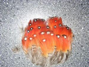 Satyr Tragopan - Breast Feathers