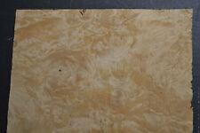 Chestnut Burl Raw Wood Veneer Sheet 115 X 15 Inches 142nd Thick I4682 43