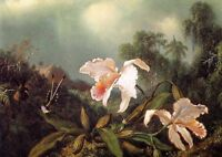 Large Oil painting Martin Johnson Heade - Jungle Orchids and Hummingbirds