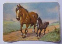 """Pferde""   Jahr 1930  8 cm x 6 cm  ♥ (62925)"