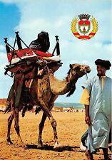 BG14222 mariage dans le haut atlas camel types folklore  morocco