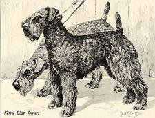 KERRY BLUE TERRIER DOGS LOVELY OLD 1930'S NINA SCOTT LANGLEY DOG ART PRINT