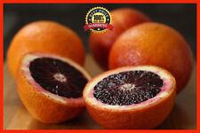50pcs Fresh Rare Moro Blood Orange Tree Seeds, Blood Orange Organic Fruit Seeds