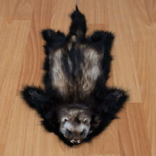 POLECAT TAXIDERMY RUG MOUNT WITH HEAD - FERRET, WEASEL PELT, FUR, SKIN, HIDE
