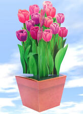 Large Tulip Gift Box -  No wrapping paper needed