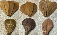XL Seemandelbaumblätter 15cm - 20cm Wasseraufbereitung, Garnelen, Welse, Diskus