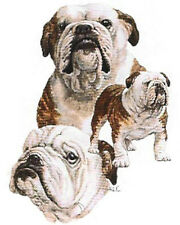 BULLDOG (English) MultiDogs on Twelve identical 6 inch fabric squares to Quilt
