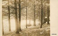 C-1910 The Pines Sunset Lakes Vermont RPPC Real photo postcard1535