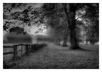 Countryside Trees - Black And White Landscape Art Large Poster & Canvas Pictures