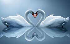 LOVE HEART SWANS ANIMAL BLUE LANDSCAPE WALL ART FRAMED CANVAS PICTURE PRINTS