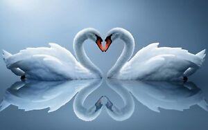 Love Heart Swans - Blue Animal Bird Landscape Art Large Poster / Canvas Pictures
