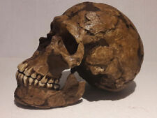 MOULAGE FOSSILE crane qafzeh 9 Homo neandertal skull hominid reproduction