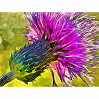 Scottish Thistle Flower Vibrant Large Wall Art Print