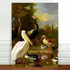 "Vintage Bird Art Birds of the world~ FINE ART CANVAS PRINT 36x24"""