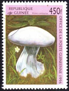 GUINEA  CLEARANCE STOCK