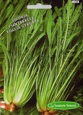 Semi/Seeds CICORIA Catalogna Puntarelle a Foglia Stretta